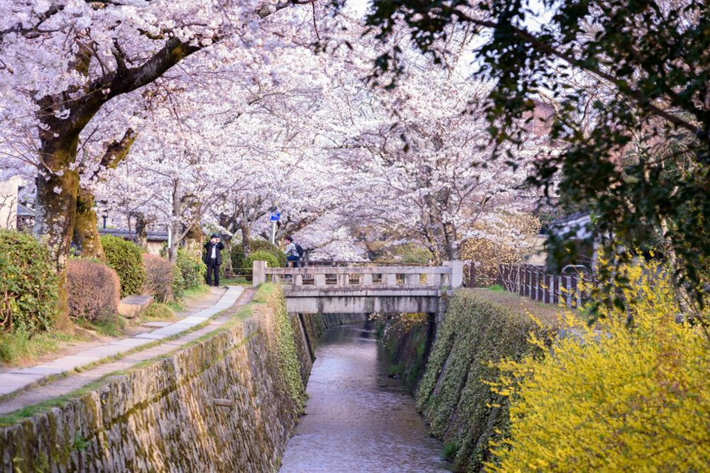 Meilleure saison pour aller au Japon