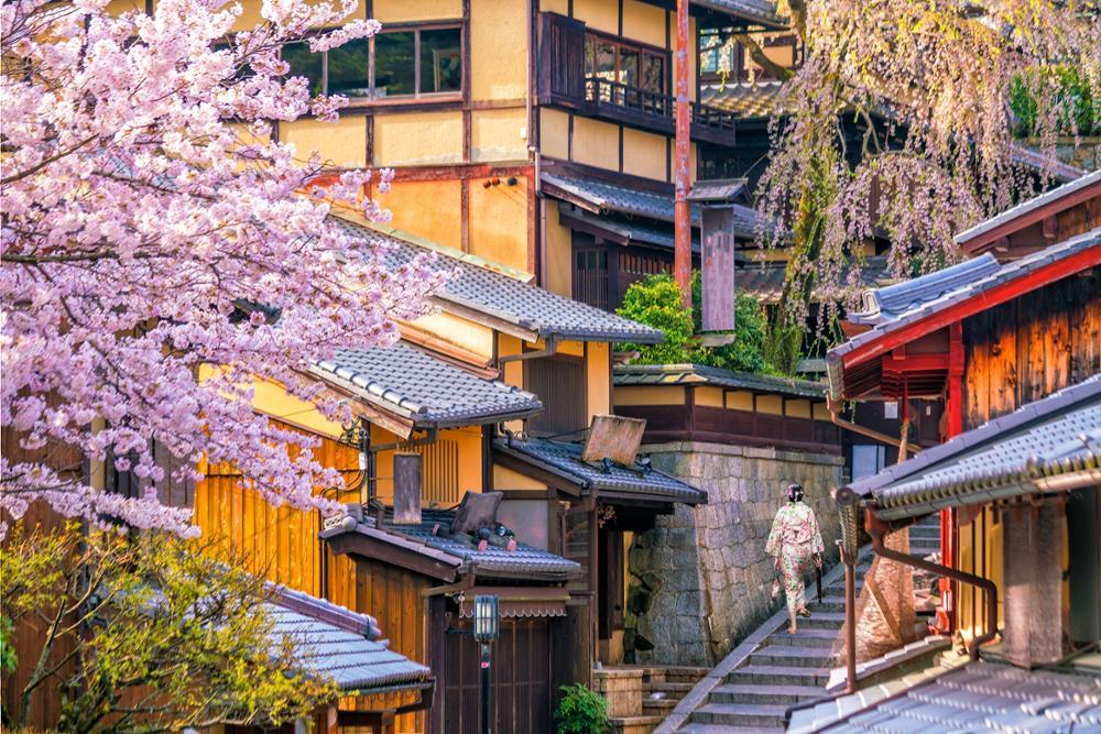 Où et quand voir les sakuras, les célèbres cerisiers en fleur au Japon ?